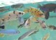 aquapet-galeria-0-11