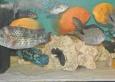 aquapet-galeria-0-8