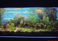 aquapet-galeria-4